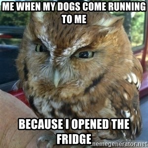 Overly Angry Owl - Me when my dogs come running to me Because I opened the fridge