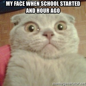 GEEZUS cat - my face when school started and hour ago
