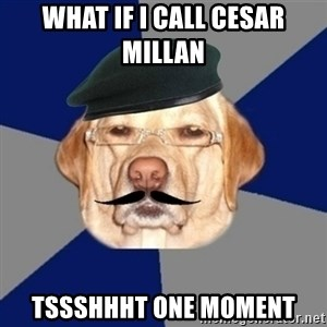 Perro machista - What if I call cesar millan  Tssshhht one moment