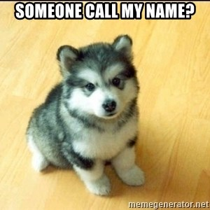 Baby Courage Wolf - someone call my name?