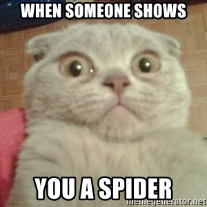 GEEZUS cat - when someone shows you a spider