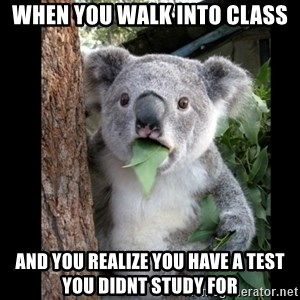 Koala can't believe it - When you walk into class and you realize you have a test you didnt study for