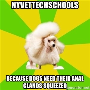 Pretentious Theatre Kid Poodle - NYVettechschools Because dogs need their anal glands squeezed