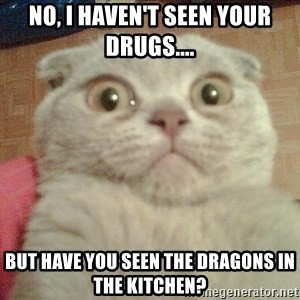 GEEZUS cat - No, I haven't seen your drugs.... But have you seen the dragons in the kitchen?