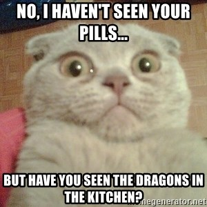 GEEZUS cat - No, I haven't seen your pills... But have you seen the dragons in the kitchen?