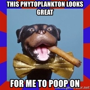 Triumph the Insult Comic Dog - This Phytoplankton Looks Great for me to poop on