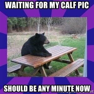 waiting bear - Waiting for my calf pic Should be any minute now