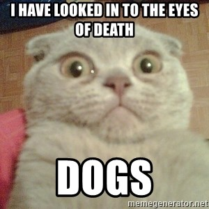 GEEZUS cat - I HAVE LOOKED IN TO THE EYES OF DEATH DOGS