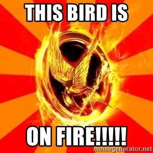 Typical fan of the hunger games - This bird is  on fire!!!!!