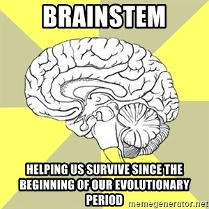 Traitor Brain - Brainstem helping us survive since the beginning of our evolutionary period