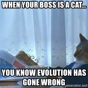 newspaper cat realization - When your boss is a cat...                                                                                      You know evolution has gone wrong