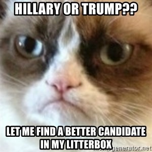 angry cat asshole - Hillary or Trump?? Let me find a better candidate in my litterbox