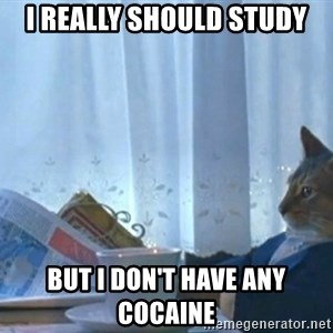 newspaper cat realization - I really should study but i don't have any cocaine