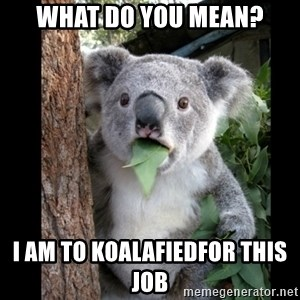 Koala can't believe it - what do you mean? i am to koalafiedfor this job