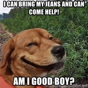 dogweedfarm - i can bring my jeans and can come help!   am i good boy?