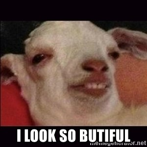 10 goat -  I look so butiful