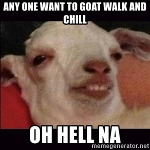 10 goat - Any one want to goat walk and chill oh hell na