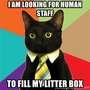 Business Cat - i am looking for human staff to fill my litter box