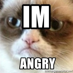 angry cat asshole - im   ANGRY