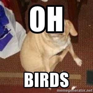 Oh You Dog - oh birds