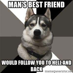 Wise Husky - Man's best friend would follow you to hell and back