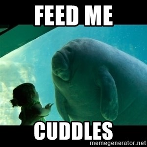 Overlord Manatee - feed me cuddles