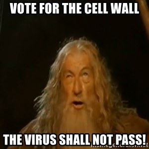 Gandalf You Shall Not Pass - vote for the cell wall the virus shall not pass!