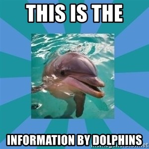 Dyscalculic Dolphin - This Is The  Information by Dolphins
