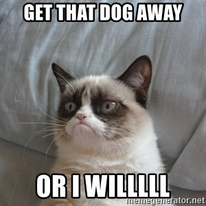 Grumpy Cat  - get that dog away  or i willlll