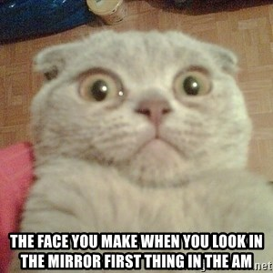 GEEZUS cat -  The face you make when you look in the mirror first thing in the am