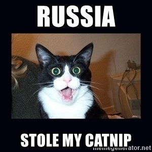 shocked cat - Russia Stole my catnip