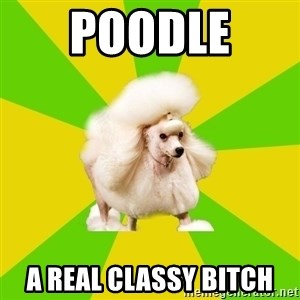 Pretentious Theatre Kid Poodle - Poodle  A real classy bitch