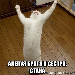 praise the lord cat -  алелуя братя и сестри. стана