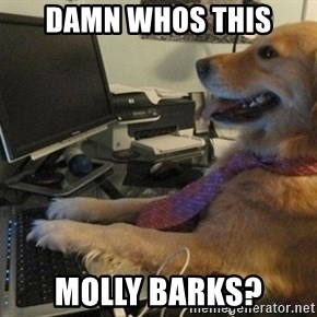 I have no idea what I'm doing - Dog with Tie - damn whos this molly barks?