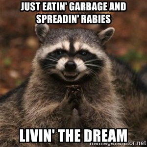 evil raccoon - Just eatin' garbage and spreadin' rabies livin' the dream