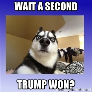 Dog Surprise - Wait a second TRUMP WON?