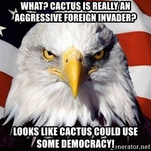 Freedom Eagle  - What? Cactus is really an aggressive foreign invader? Looks like cactus could use some democracy!