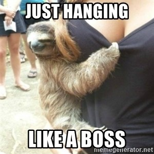 Perverted Sloth - just hanging like a boss