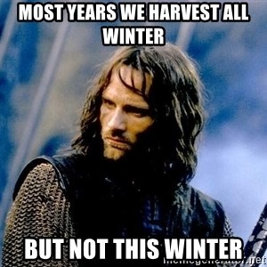 Not this day Aragorn - most years we harvest all winter but not this winter