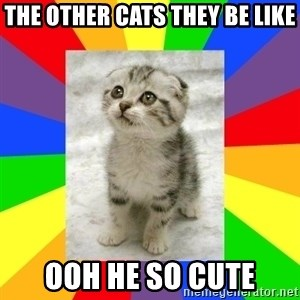 Cute Kitten - the other cats they be like ooh he so cute