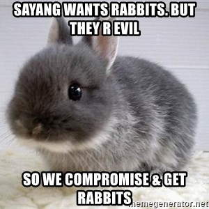 ADHD Bunny - Sayang wants rabbits. But they r evil So we compromise & get rabbits