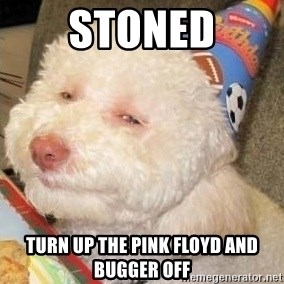 Troll dog - stoned turn up the pink floyd and bugger off