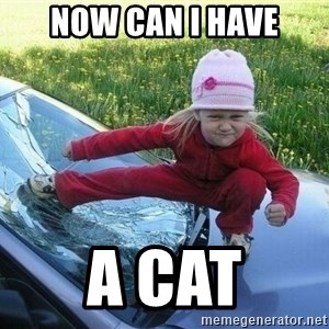Angry Karate Girl - Now can I have a cat