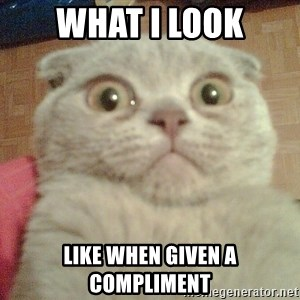 GEEZUS cat - What I look like when given a compliment