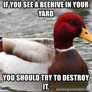 Malicious advice mallard - If you see a beehive in your yard You should try to destroy it.