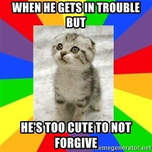 Cute Kitten - When he gets in trouble but He's too cute to not forgive
