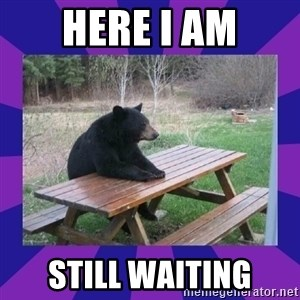 waiting bear - Here I Am Still Waiting