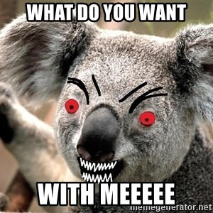 Abortion Koala - what do you want with meeeee