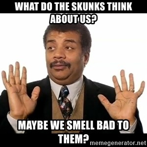 AY YA - What do the skunks think about us? Maybe we smell bad to them?
