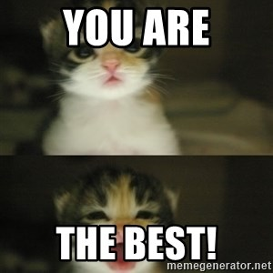 Adorable Kitten - you are the best!